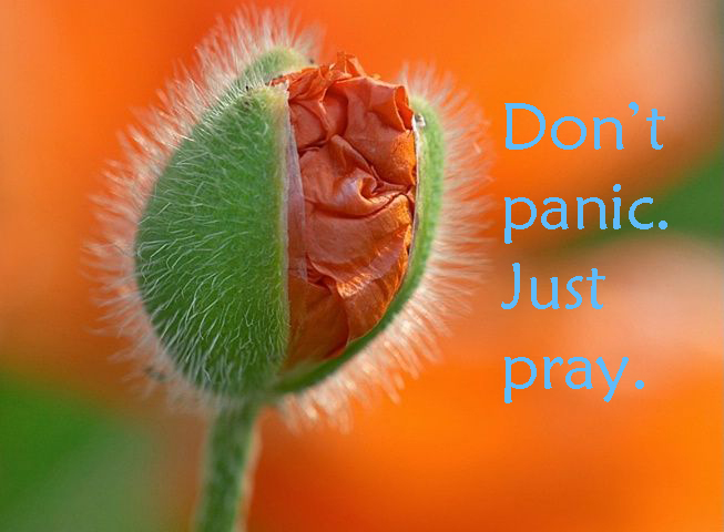 dont panic just pray