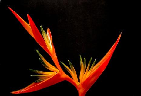 blossom-200933_1920.jpg