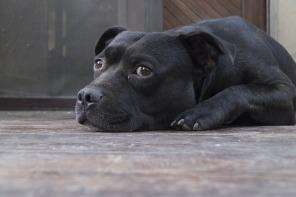 dog-873794_1920